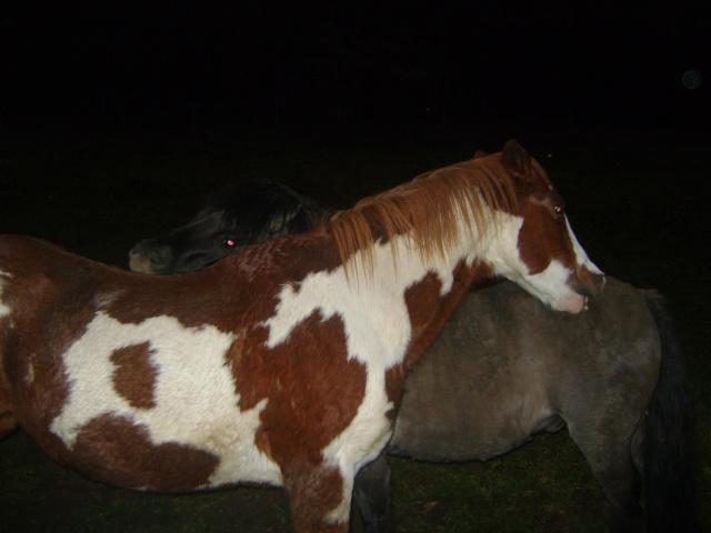 WALANIE (VANILLE) - ONC poney - adoptée en avril 2011 par voulk  - Page 5 00211