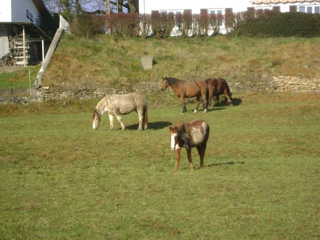 WALANIE (VANILLE) - ONC poney - adoptée en avril 2011 par voulk  - Page 5 00311