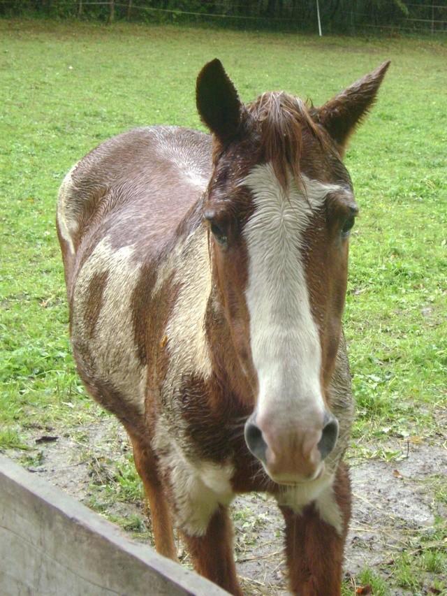 WALANIE (VANILLE) - ONC poney - adoptée en avril 2011 par voulk  - Page 5 00410