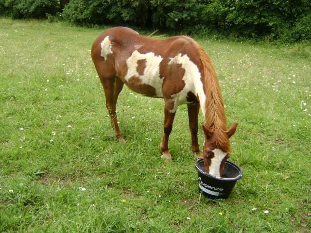 WALANIE (VANILLE) - ONC poney - adoptée en avril 2011 par voulk  - Page 4 004_410