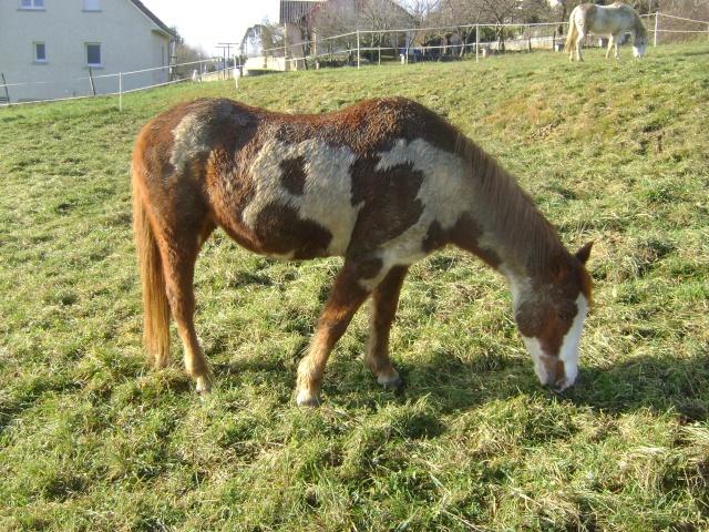 WALANIE (VANILLE) - ONC poney - adoptée en avril 2011 par voulk  - Page 5 00511
