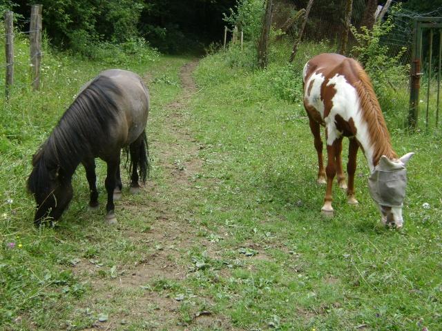 WALANIE (VANILLE) - ONC poney - adoptée en avril 2011 par voulk  - Page 4 005_510