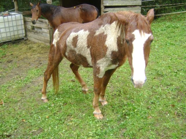WALANIE (VANILLE) - ONC poney - adoptée en avril 2011 par voulk  - Page 5 00710