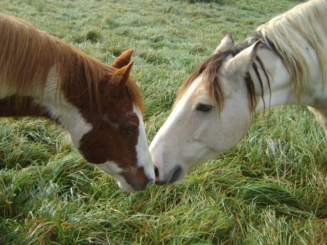 WALANIE (VANILLE) - ONC poney - adoptée en avril 2011 par voulk  - Page 5 01410