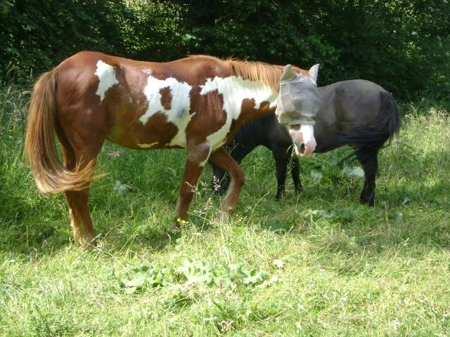 WALANIE (VANILLE) - ONC poney - adoptée en avril 2011 par voulk  - Page 4 016_410