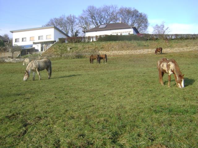 WALANIE (VANILLE) - ONC poney - adoptée en avril 2011 par voulk  - Page 5 01810