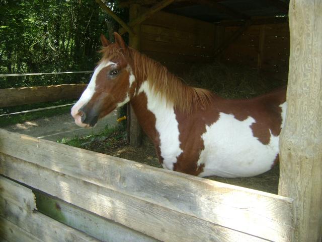 WALANIE (VANILLE) - ONC poney - adoptée en avril 2011 par voulk  - Page 4 01910