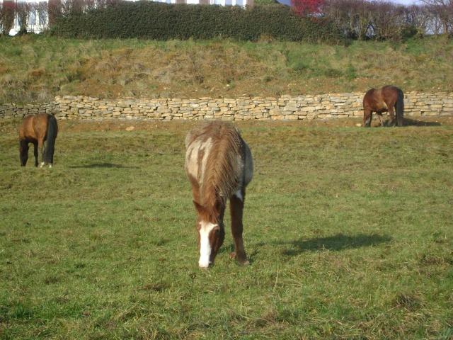 WALANIE (VANILLE) - ONC poney - adoptée en avril 2011 par voulk  - Page 5 02010