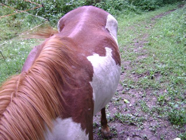 WALANIE (VANILLE) - ONC poney - adoptée en avril 2011 par voulk  - Page 4 022_410