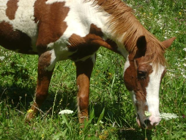 WALANIE (VANILLE) - ONC poney - adoptée en avril 2011 par voulk  - Page 4 02310