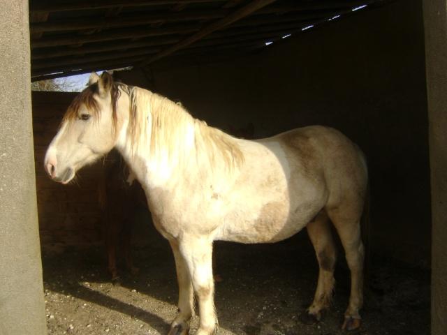 WALANIE (VANILLE) - ONC poney - adoptée en avril 2011 par voulk  - Page 5 02311