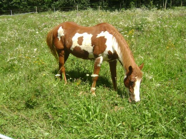WALANIE (VANILLE) - ONC poney - adoptée en avril 2011 par voulk  - Page 4 02410