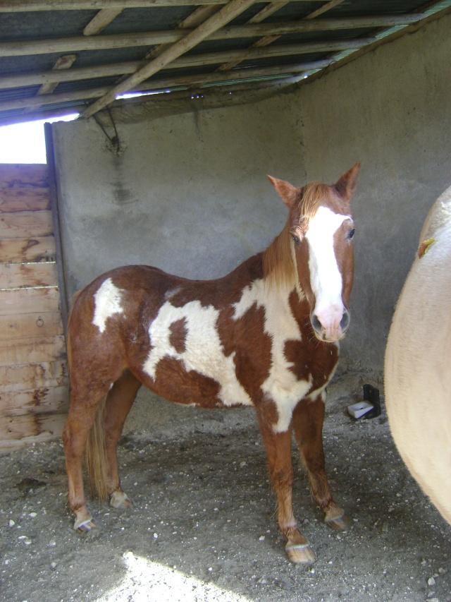 WALANIE (VANILLE) - ONC poney - adoptée en avril 2011 par voulk  - Page 5 02411