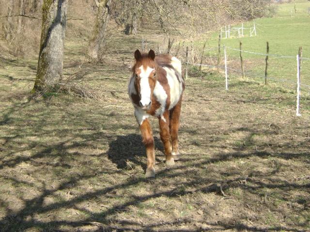 WALANIE (VANILLE) - ONC poney - adoptée en avril 2011 par voulk  - Page 5 02510