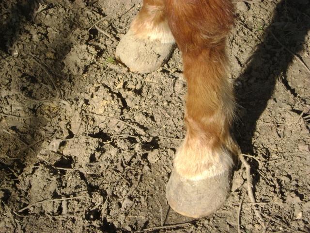 WALANIE (VANILLE) - ONC poney - adoptée en avril 2011 par voulk  - Page 5 02710