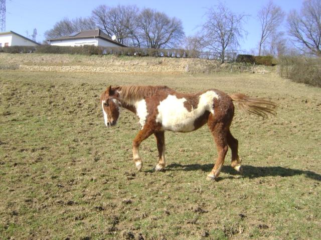 WALANIE (VANILLE) - ONC poney - adoptée en avril 2011 par voulk  - Page 5 03510