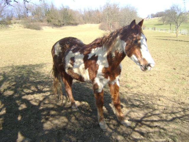 WALANIE (VANILLE) - ONC poney - adoptée en avril 2011 par voulk  - Page 5 03910