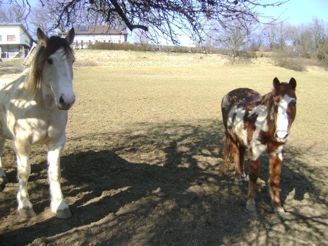 WALANIE (VANILLE) - ONC poney - adoptée en avril 2011 par voulk  - Page 5 04110
