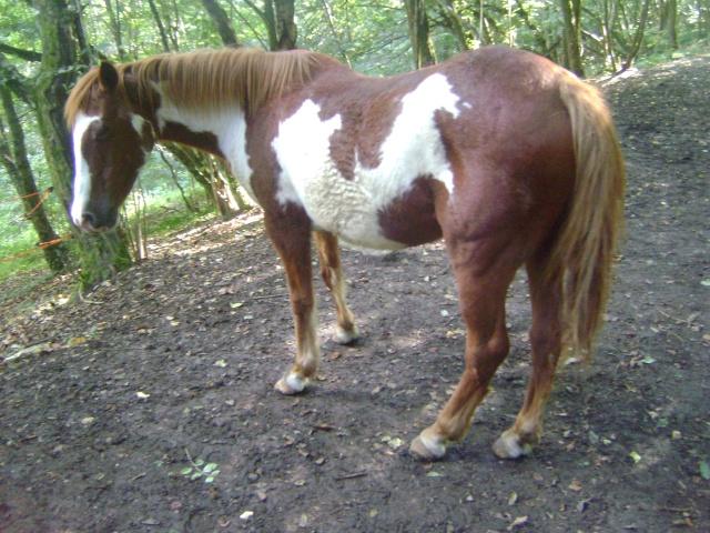 WALANIE (VANILLE) - ONC poney - adoptée en avril 2011 par voulk  - Page 4 042_410