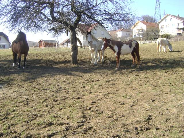 WALANIE (VANILLE) - ONC poney - adoptée en avril 2011 par voulk  - Page 5 04310