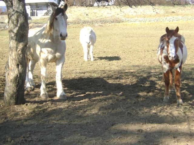 WALANIE (VANILLE) - ONC poney - adoptée en avril 2011 par voulk  - Page 5 04412