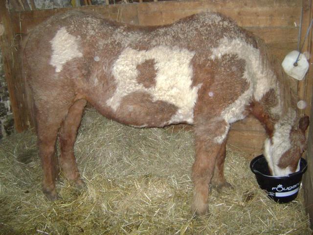 WALANIE (VANILLE) - ONC poney - adoptée en avril 2011 par voulk  - Page 5 04510