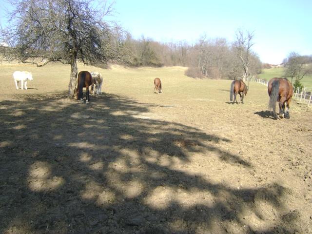 WALANIE (VANILLE) - ONC poney - adoptée en avril 2011 par voulk  - Page 5 04511