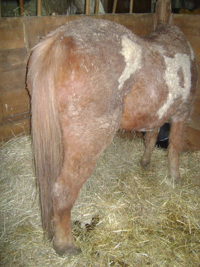 WALANIE (VANILLE) - ONC poney - adoptée en avril 2011 par voulk  - Page 5 04610