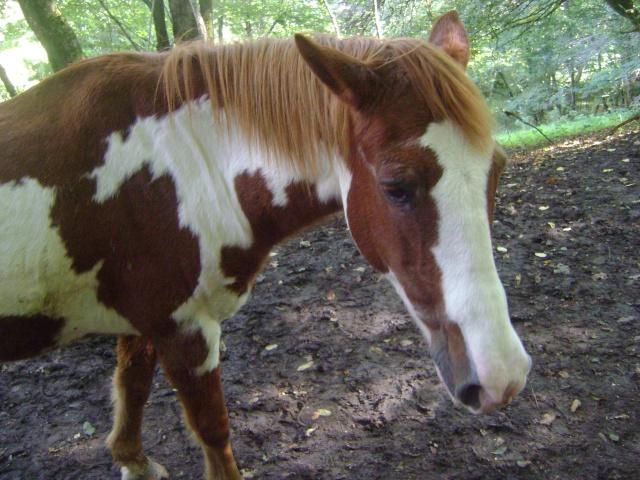 WALANIE (VANILLE) - ONC poney - adoptée en avril 2011 par voulk  - Page 4 046_310