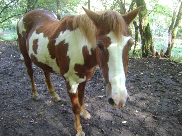 WALANIE (VANILLE) - ONC poney - adoptée en avril 2011 par voulk  - Page 4 049_210