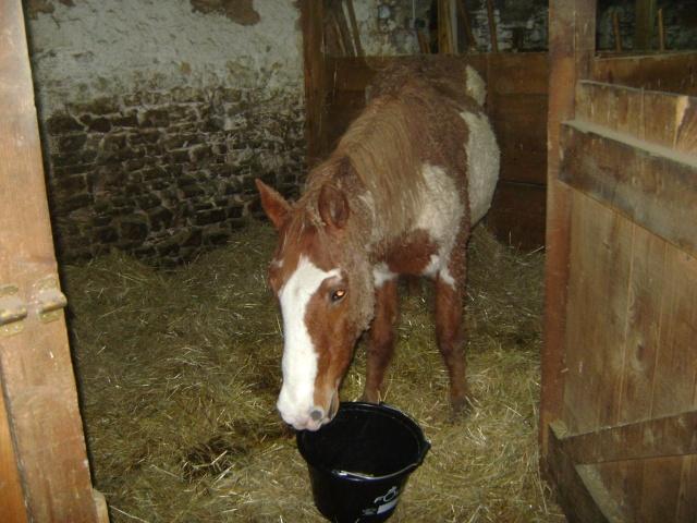 WALANIE (VANILLE) - ONC poney - adoptée en avril 2011 par voulk  - Page 5 05110