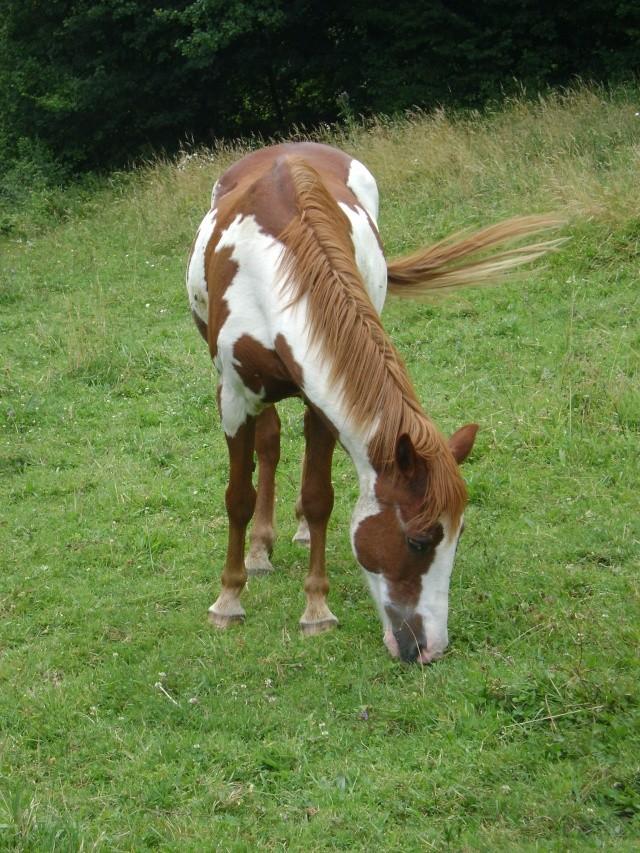 WALANIE (VANILLE) - ONC poney - adoptée en avril 2011 par voulk  - Page 4 19910