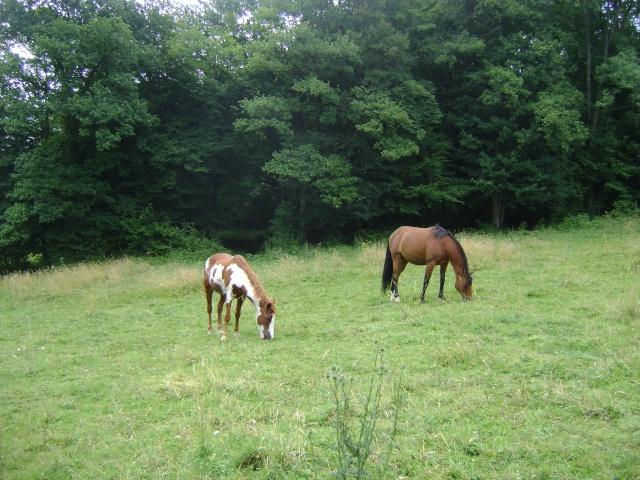 WALANIE (VANILLE) - ONC poney - adoptée en avril 2011 par voulk  - Page 4 20110