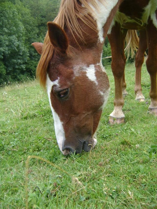 WALANIE (VANILLE) - ONC poney - adoptée en avril 2011 par voulk  - Page 4 20610