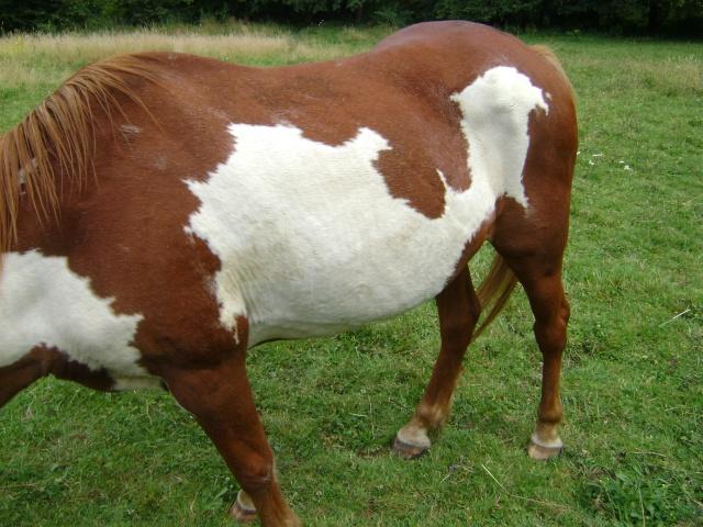 WALANIE (VANILLE) - ONC poney - adoptée en avril 2011 par voulk  - Page 4 21310