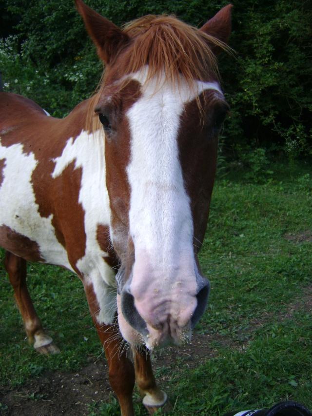 WALANIE (VANILLE) - ONC poney - adoptée en avril 2011 par voulk  - Page 4 25410