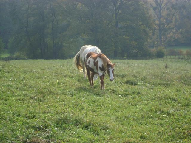 WALANIE (VANILLE) - ONC poney - adoptée en avril 2011 par voulk  - Page 5 25510