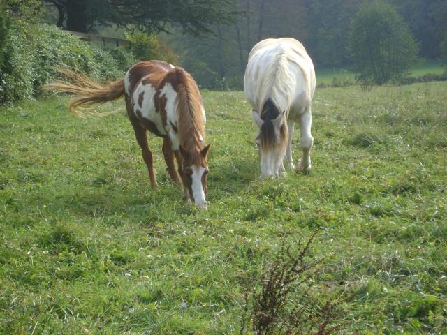 WALANIE (VANILLE) - ONC poney - adoptée en avril 2011 par voulk  - Page 5 25610