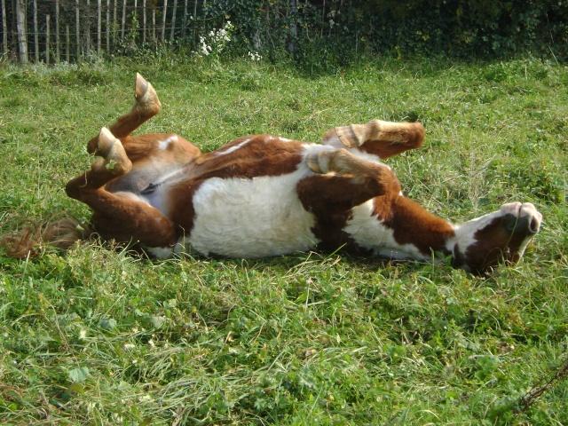 WALANIE (VANILLE) - ONC poney - adoptée en avril 2011 par voulk  - Page 5 26310