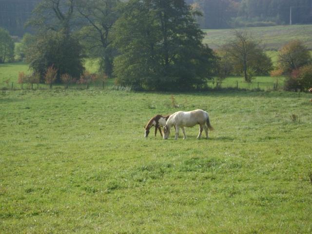 WALANIE (VANILLE) - ONC poney - adoptée en avril 2011 par voulk  - Page 5 26710