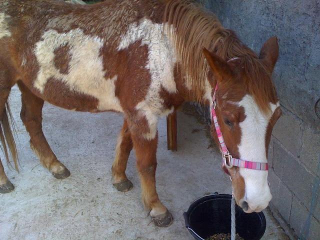 WALANIE (VANILLE) - ONC poney - adoptée en avril 2011 par voulk  - Page 5 29257410