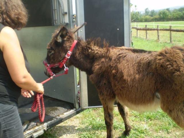 BOURRIFEE, renommée JOSETTE (dite PÉPÉTTE) - ONC âne née en 2010 - adoptée en août 2011 par Stephele12 - Page 2 29356810