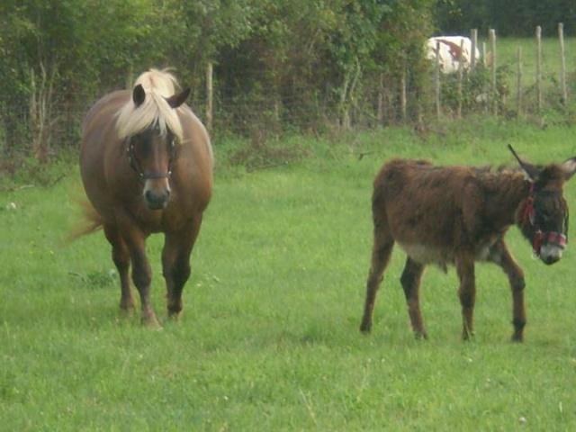 BOURRIFEE, renommée JOSETTE (dite PÉPÉTTE) - ONC âne née en 2010 - adoptée en août 2011 par Stephele12 - Page 2 29438710