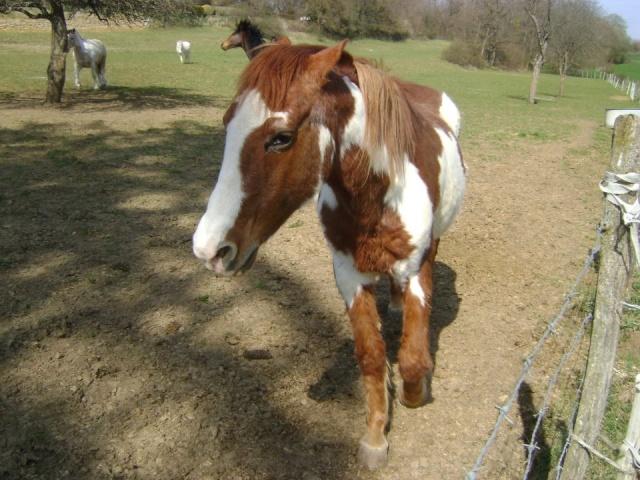 WALANIE (VANILLE) - ONC poney - adoptée en avril 2011 par voulk  - Page 5 29506610