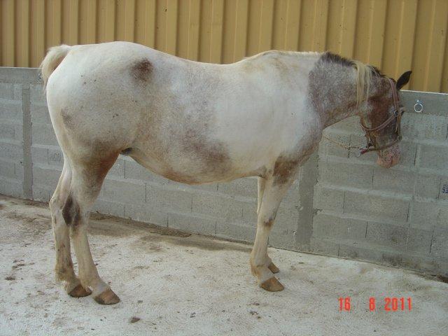 EGLANTINE - ONC selle typée Appaloosa née en 1993 - adoptée en août 2011 par anne-canelle - Page 2 29706310
