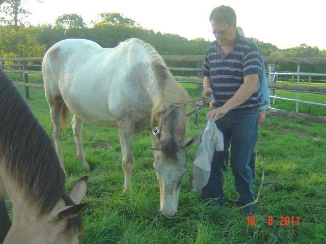 EGLANTINE - ONC selle typée Appaloosa née en 1993 - adoptée en août 2011 par anne-canelle - Page 2 29899410
