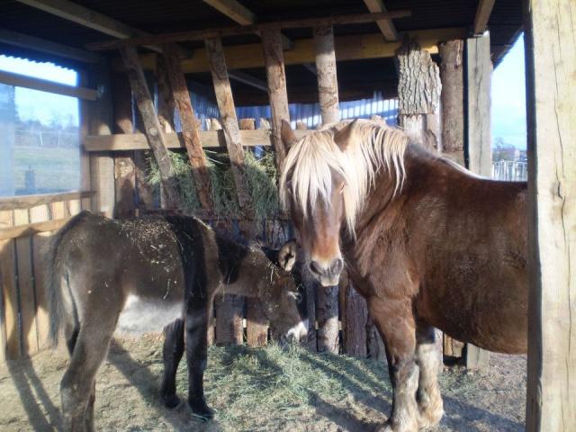 BOURRIFEE, renommée JOSETTE (dite PÉPÉTTE) - ONC âne née en 2010 - adoptée en août 2011 par Stephele12 - Page 2 30064710