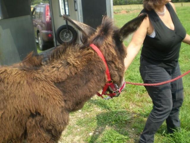 BOURRIFEE, renommée JOSETTE (dite PÉPÉTTE) - ONC âne née en 2010 - adoptée en août 2011 par Stephele12 - Page 2 30076810