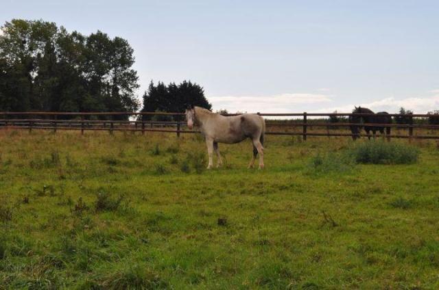 EGLANTINE - ONC selle typée Appaloosa née en 1993 - adoptée en août 2011 par anne-canelle - Page 2 31042810