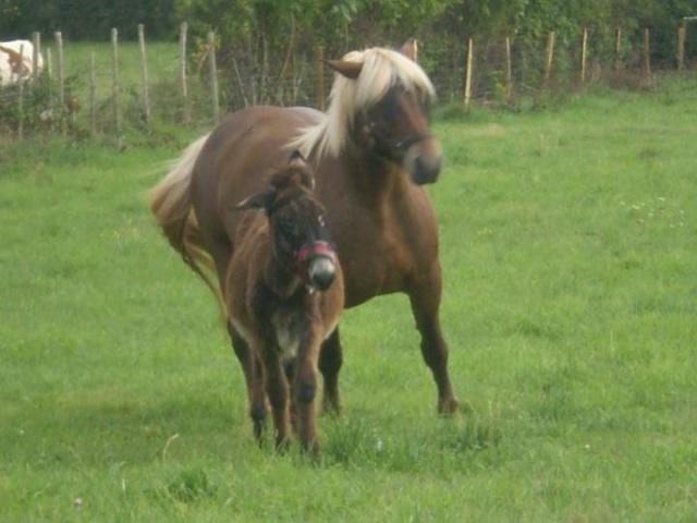 BOURRIFEE, renommée JOSETTE (dite PÉPÉTTE) - ONC âne née en 2010 - adoptée en août 2011 par Stephele12 - Page 2 31220210